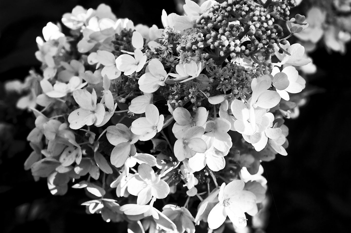 Black and White Flowers. Hmm… | right in front of me